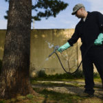 The Most Common Pests in Texas & Why You Should Hire A Pest Control Company