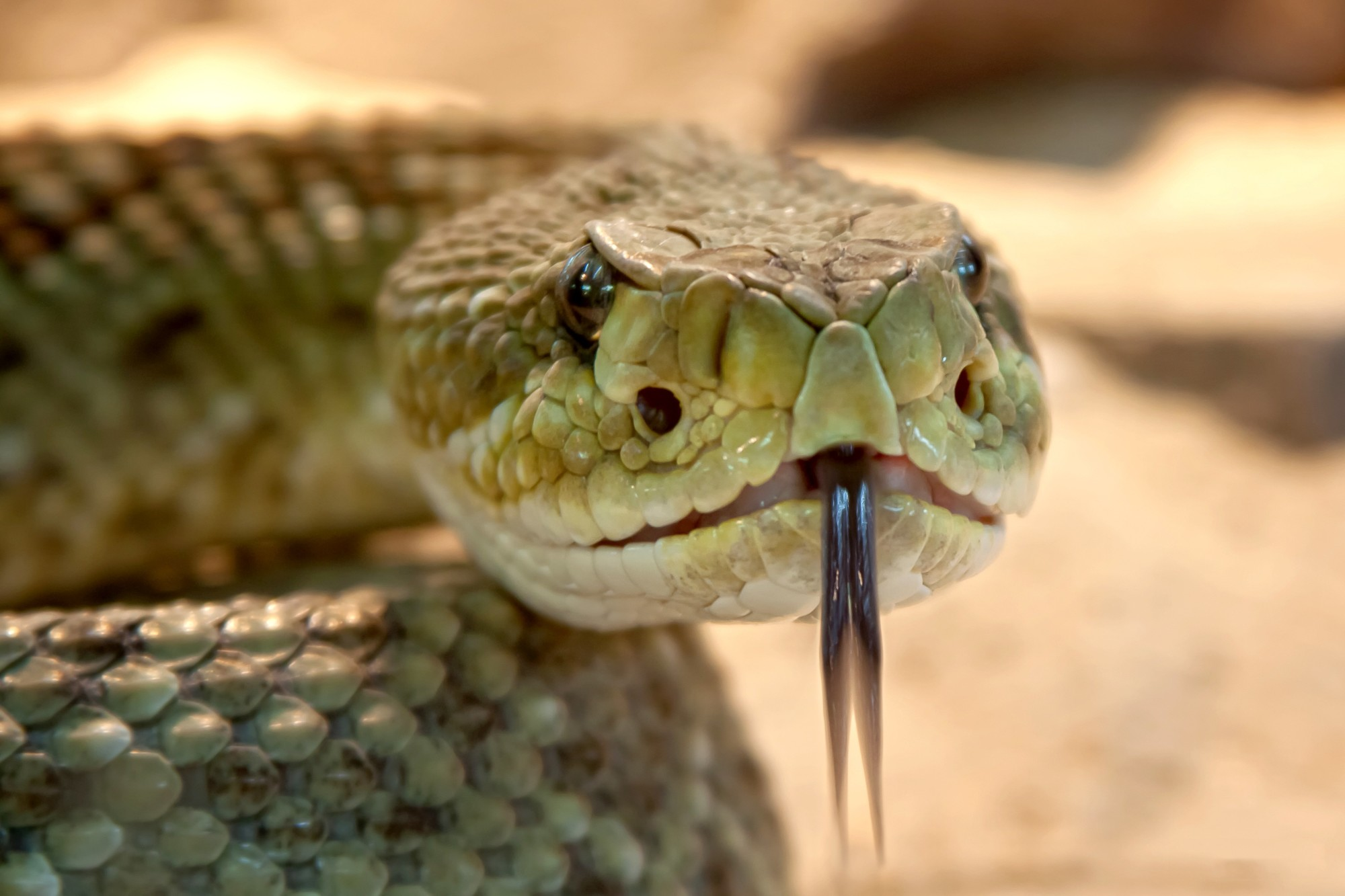 Yikes! What Do You Do If You See a Snake in Your Backyard?